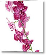 Beautiful Burgundy Orchid Flower Original Floral Painting Pink Orchid I By Megan Duncanson Madart Metal Print