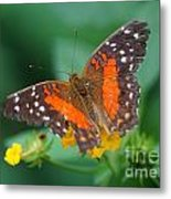 Red Anartia Butterfly 1 Metal Print