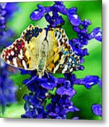 Beautiful Butterfly On A Flower Metal Print