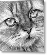 Beautiful Cat Metal Print by Olga Shvartsur
