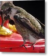 Beautiful Colored Hummingbird Metal Print