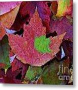Beautiful Colors Of Fall Metal Print