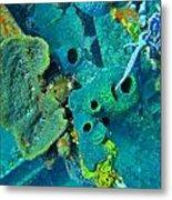 Beautiful Coral  Metal Print