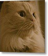 Beautiful Creamy Persian Cat Mix Portrait Metal Print