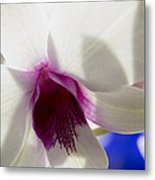 Beautiful Dendrobium Orchid Metal Print by Dana Moyer