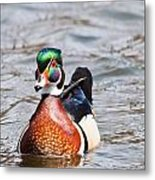 Beautiful Duck Metal Print
