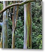 Beautiful Eucalyptus Metal Print