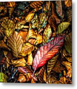 Beautiful Fall Color Metal Print