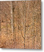 Beautiful Fine Structure Of Trees Brown And Orange Metal Print