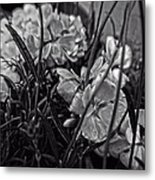 Beautiful Floral Blossoms Metal Print by Doc Braham
