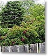 Beautiful Front Yard - Roses - Trees Metal Print