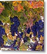 Beautiful Grape Harvest Metal Print