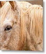 Beautiful Gray Horse Portrait Metal Print