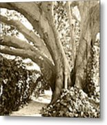 Beautiful Griffith Park Huge Trunk Tree Sepia Black White Vintage Earthy Fine Art Decorative Print Metal Print by Marie Christine Belkadi