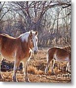 Beautiful Horses Metal Print