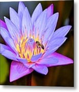 Beautiful Lily And Visiting Bee Metal Print