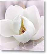 Beautiful Magnolia Bloom Metal Print