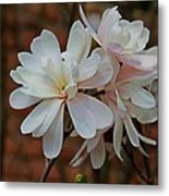 Beautiful Magnolias Metal Print by Victoria Sheldon
