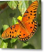 Beautiful Orange Butterfly - Gulf Fritillary Metal Print