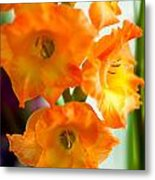 Beautiful Orange Gladiolus Metal Print