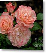 Beautiful Peach Roses Metal Print