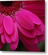 Beautiful Petals Metal Print