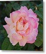Beautiful Pink Rose Metal Print