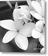 Beautiful Plumeria In Black And White Metal Print