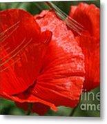 Beautiful Poppies 10 Metal Print
