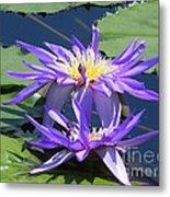 Beautiful Purple Lilies Metal Print