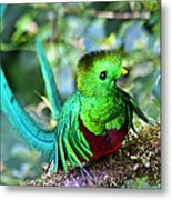 Beautiful Quetzal 5 Metal Print