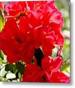 Beautiful Red Roses Metal Print