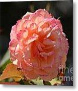 Beautiful Rose Blossom Metal Print