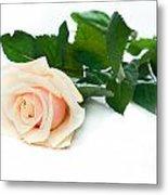 Beautiful Rose On White Metal Print