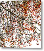 Beautiful Rowan 1 Metal Print