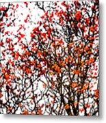 Beautiful Rowan 12 Metal Print