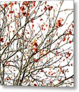 Beautiful Rowan 4 Metal Print
