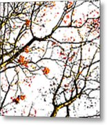 Beautiful Rowan 7 Metal Print
