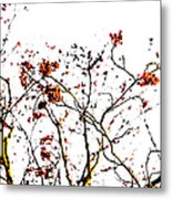 Beautiful Rowan 8 Metal Print