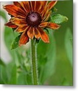 Beautiful Shades Of Brown  Metal Print