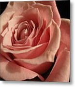 Beautiful Peach Rose Metal Print
