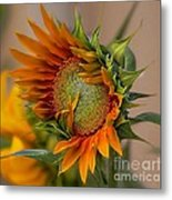 Beautiful Sunflower Metal Print