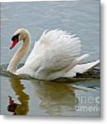 Beautiful Swan Metal Print