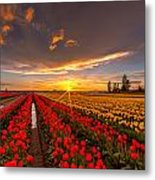Beautiful Tulip Field Sunset Metal Print