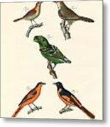 Beautiful Und Strange Foreign Birds Metal Print