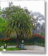 Beautiful Ventura Palm Metal Print