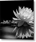 Beautiful Water Lily Reflections Metal Print