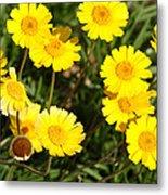 Beautiful Weeds 32655 Metal Print
