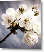 Beautiful White Blossoms Metal Print
