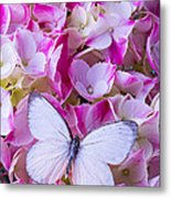 Beautiful White Butterfly Metal Print